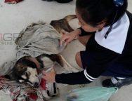 เด็กนักเรียน ชั้นม.2 รร.สรรพวิทยาคม วอนช่วยเหลือหมาถูกทำร้ายสาหัส