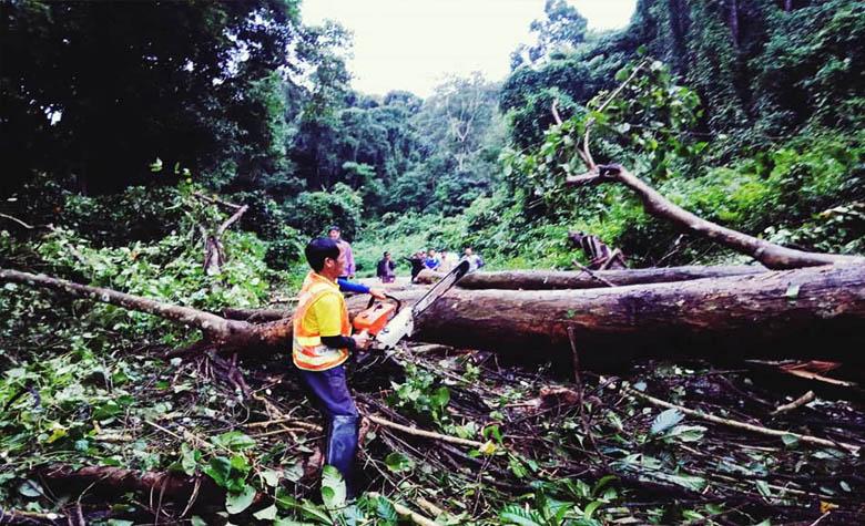 """""""โพดุล"""" ล้มต้นไม้ใหญ่อายุนับ 100 ปี ทับขวางถนน"""