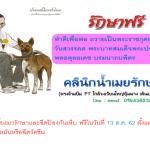 ประชาสัมพันธ์ : ทำดีเพื่อในหลวง รักษาสัตว์ฟรี 13 ต.ค.62